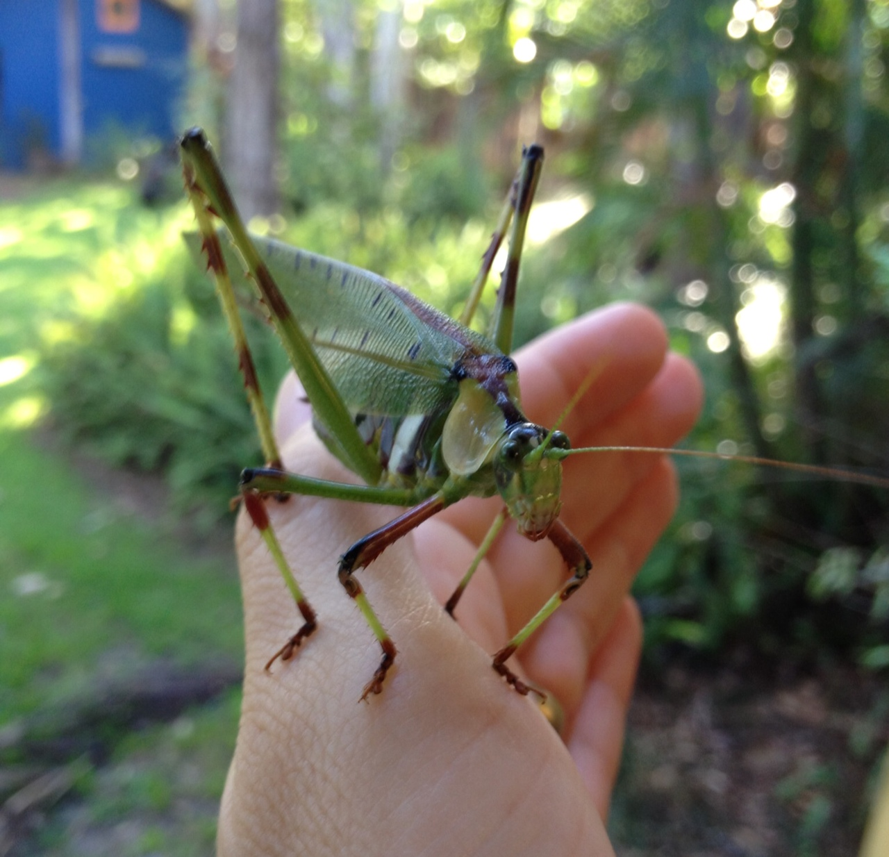 leaves and grasshopper relationship questions