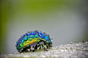 dew-covered-insect