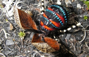 mountain katydid colours