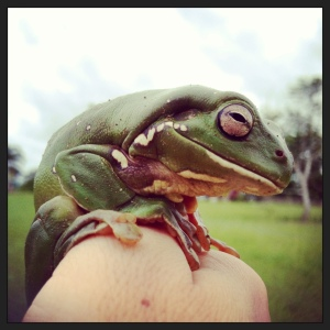 My mailbox green frog.