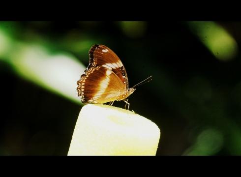 DSC_0032-002