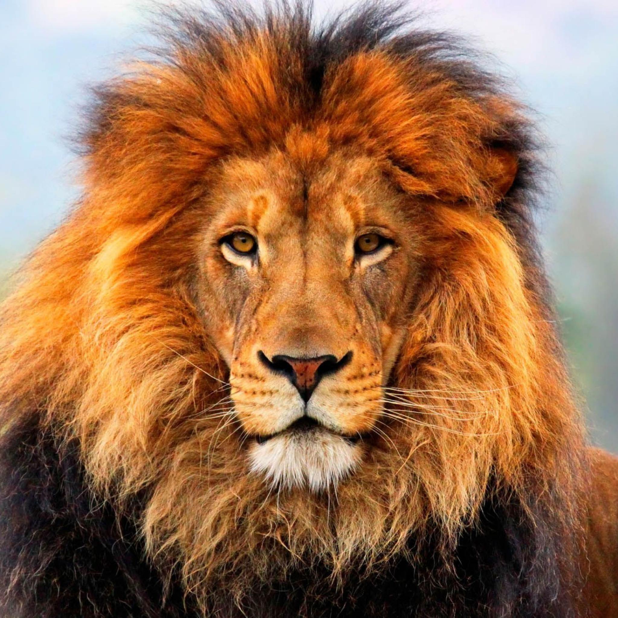 Sony lion sexy