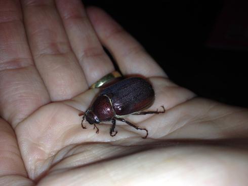 beetlehand
