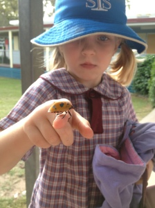 My brave girl holding a Cotton Harlequin bug