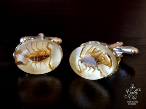 Real scorpion cuff links